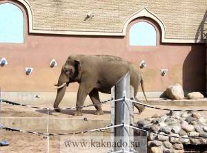 слон в московском зоопарке