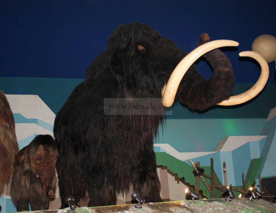 мамонта из ледникового периода