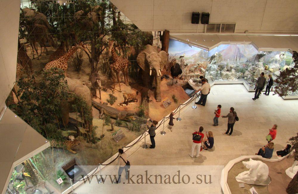 дом в какой музей сходить с детьми эксперимента, основного метода