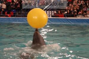 новый московский дельфинарий