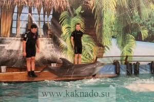 новый дельфинарий