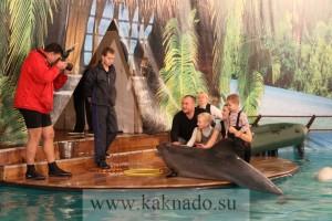 можно сфотографироваться с дельфином