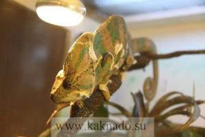 московский дом бабочек на вднх
