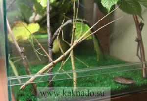 палочник в московском доме бабочек