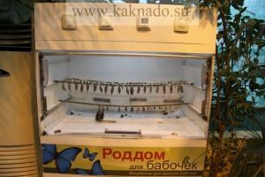 роддом для бабочек в московском доме бабочек