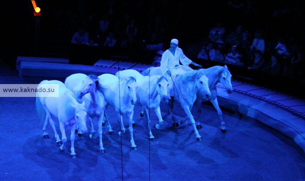 цирковой спектакль времена в цирке на проспекте вернадского, отзывы