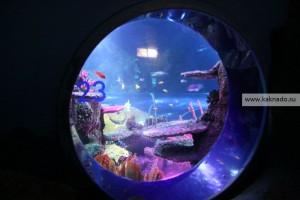 океанариум sea life, хельсинки, отзывы, окно с акулами