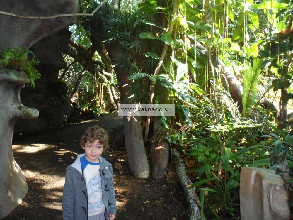 пражский зоопарк, павильон индонезийские джунгли