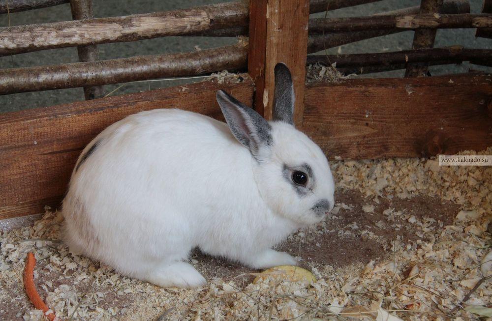 контактный зоопарк на вднх, отзывы, фотографии, кролик