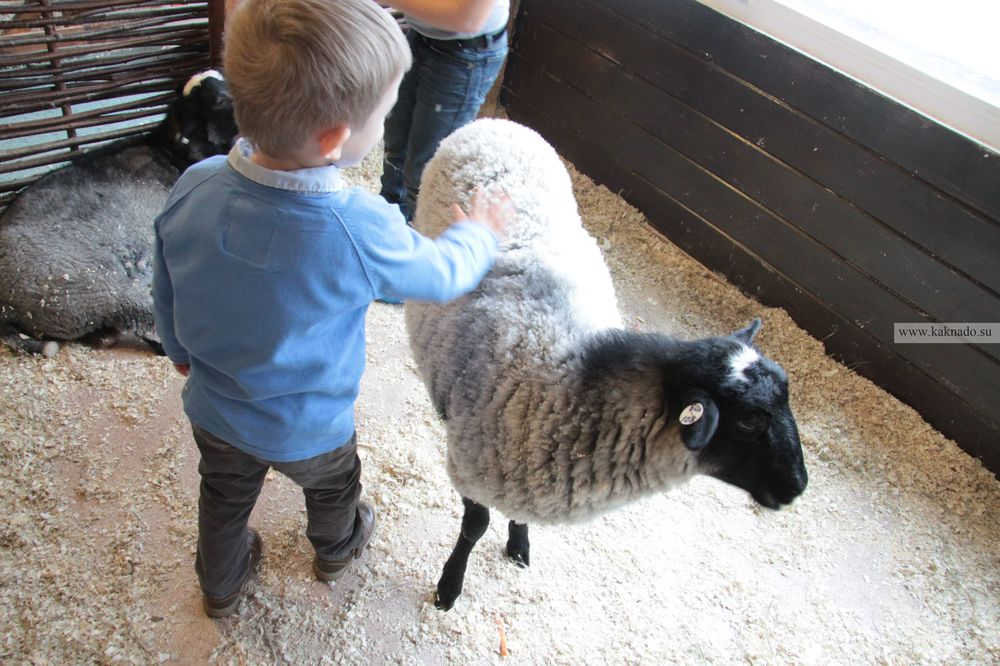 контактный зоопарк на вднх, отзывы, фотографии, овца