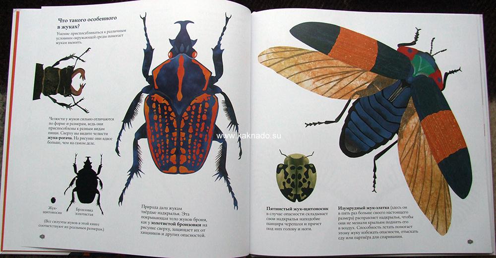 """""""в мире жуков"""" отзывы Стив Дженкинс"""