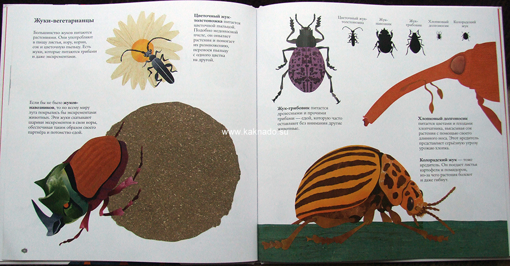 книга о жуках стив дженкинс отзывы