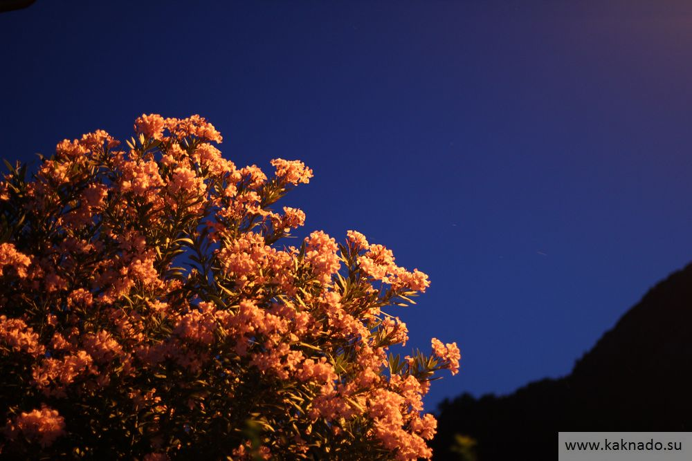 цветы в чирали3