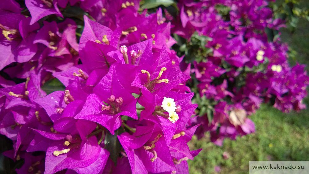 цветы в чирали5