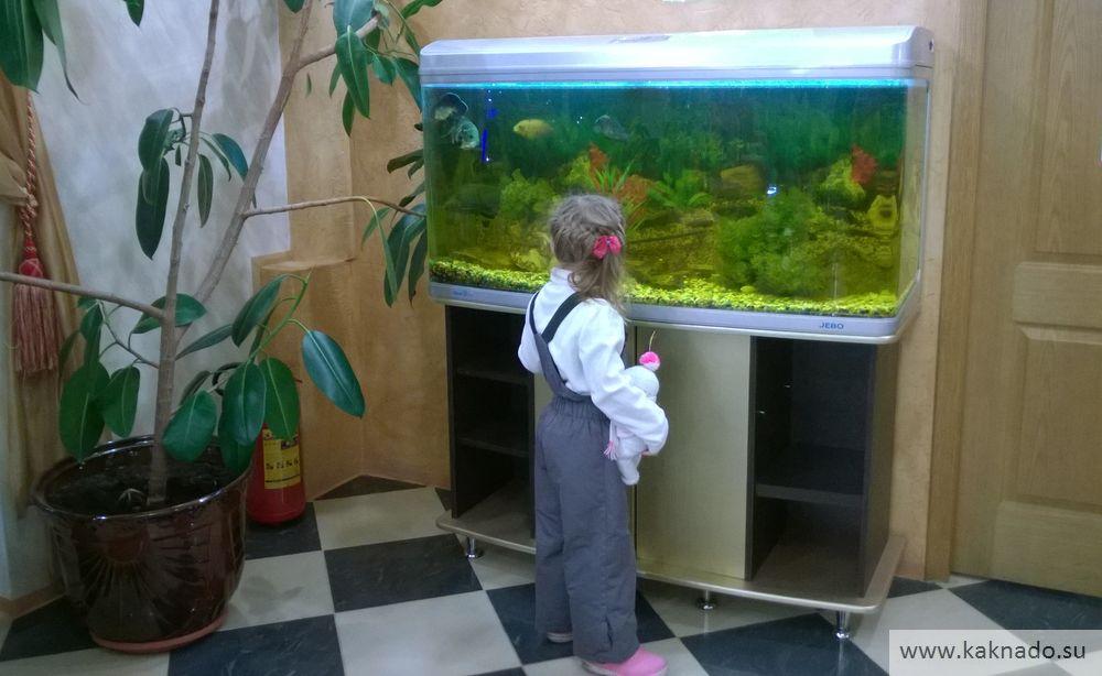 аквариум в ресторане