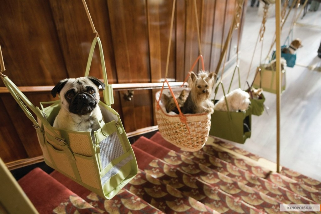 отель для собак