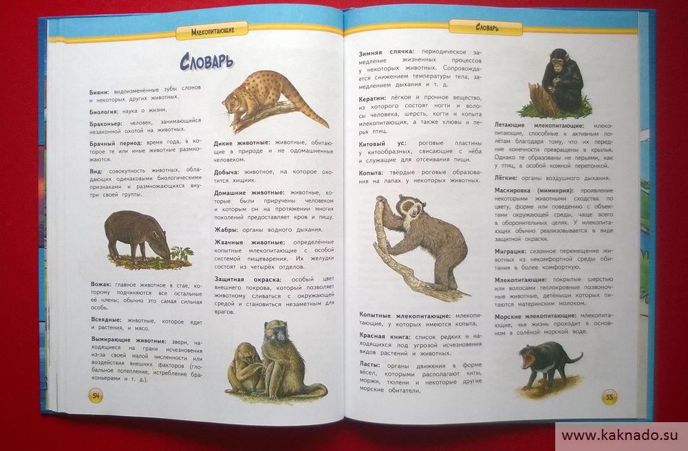 энциклопедия млекопитающие_16
