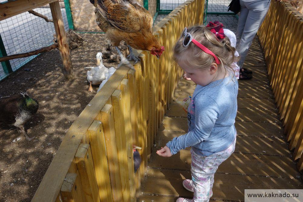 контактный зоопарк ривьера казань_10
