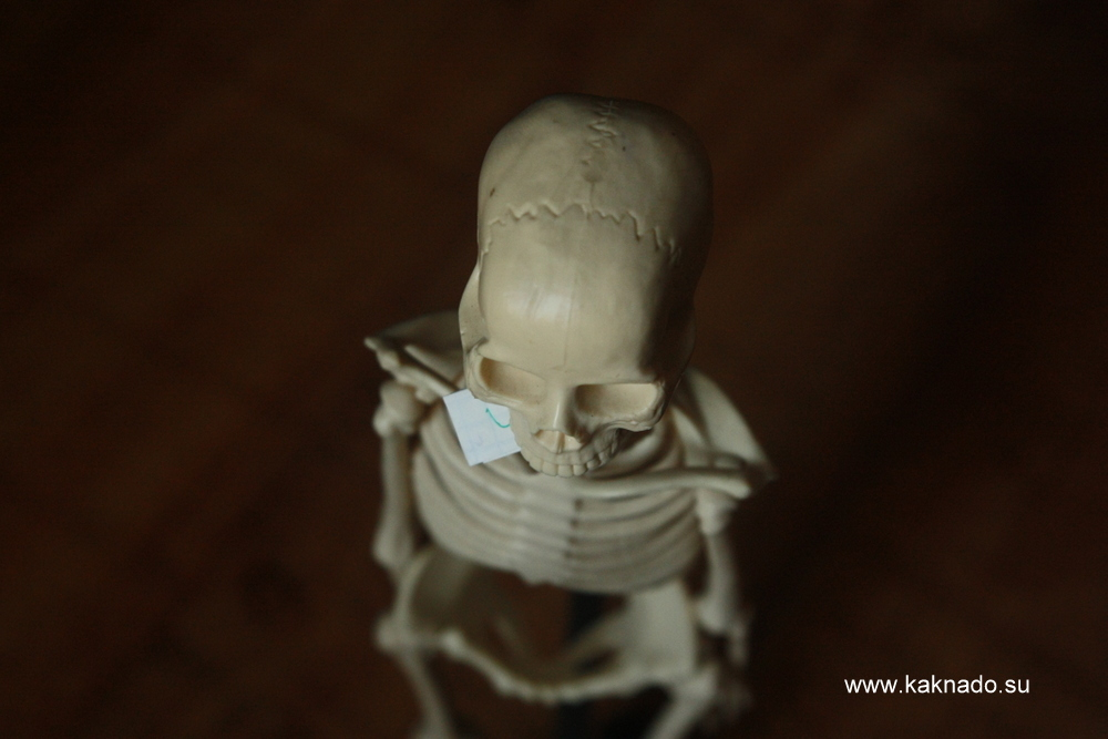 записка в черепе