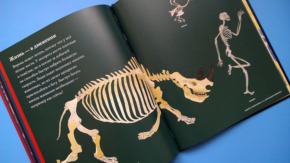 кости и скелеты