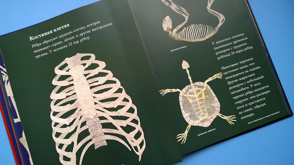 книга про скелеты