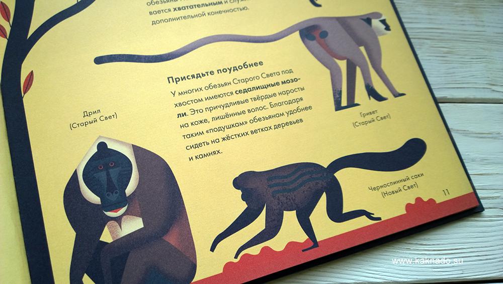 без ума от обезьян 5