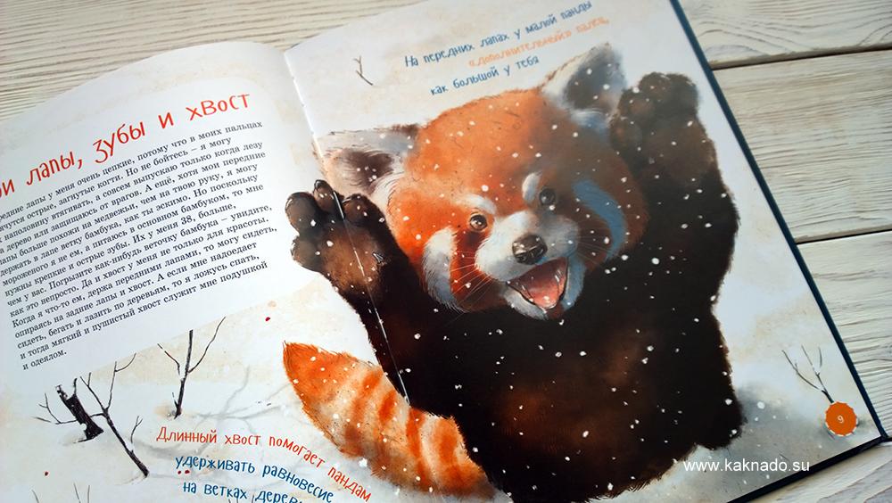 я малая панда 6