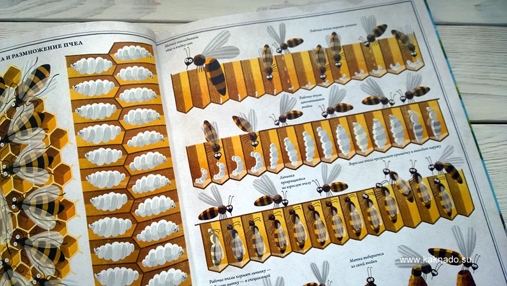 Петр Соха Пчелы 3