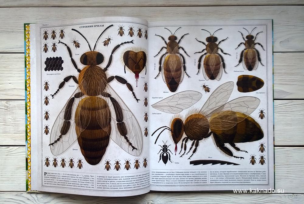 Петр Соха Пчелы 4