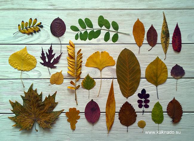 Оригинальный гербарий из листьев фото 151