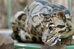 Что посмотреть в Праге? Пражский зоопарк